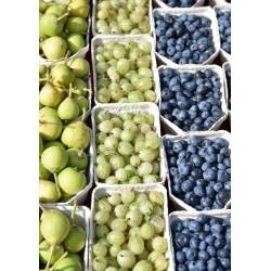 Berry fruits poster | Snygg tavla till kök - Spoca