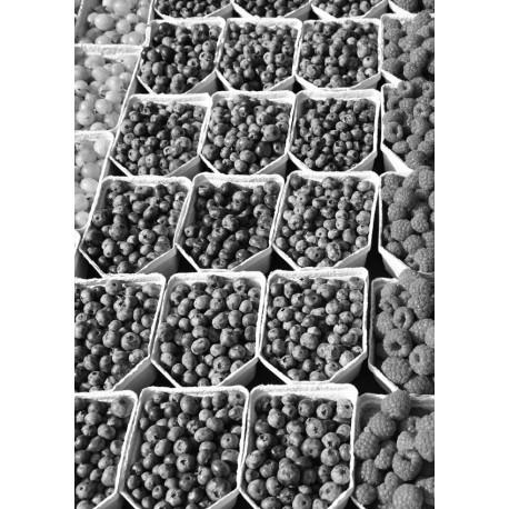 Fruits poster | Cool svartvit tavla till kök - Spoca