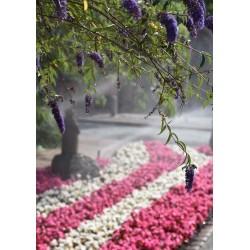 Purple flowers poster | Cool tavelvägg - Spoca