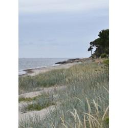 Beach poster | Hitta tavlor online - Spoca