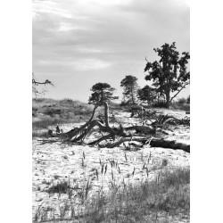 Svartvit fotokonst. Tavlor och prints med naturmotiv i svart och vitt