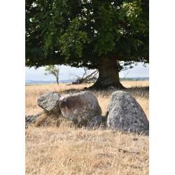 Tree by stones poster | Tavlor och prints med naturmotiv - Spoca