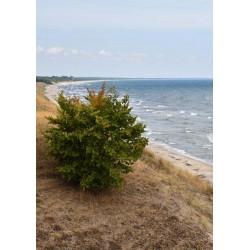 Sea picture poster | Bygg en tavelvägg med naturmotiv - Spoca