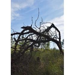 Broken tree poster | Tavla med fotografiska motiv - Spoca