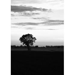 Konstfotografi där naturen bjuder på detta storslagna motiv i stämningsfullt ljus över Skåne.