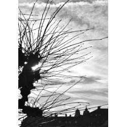 Svartvita Sky posters | Magiska tavlor, prints i svart och vitt - Spoca