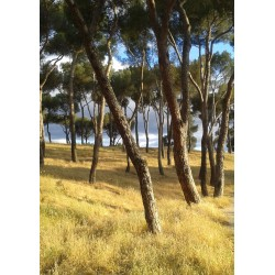 Posters med naturmotiv. Vacker tavla med foto av skog.