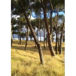 Fotokonst med naturmotiv. Vacker tavla med foto av träd - Spoca