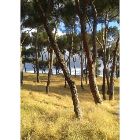 Posters med naturmotiv. Tavla med foto av skog.