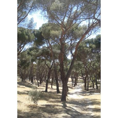 Poster/tavla med naturmotiv från Madrid. Fin fotoposter till tavelvägg.