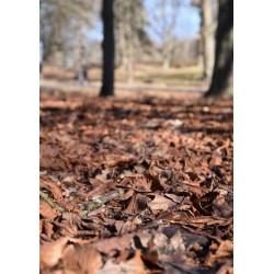 Fotokonst av rödbruna löv. Vackra naturmotiv från spoca edition