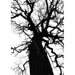 Svartvit fotokonst. Köp prints online från Spoca edition
