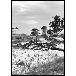 Svartvit fotokonst. Tavlor och prints med naturmotiv i svart och vitt.