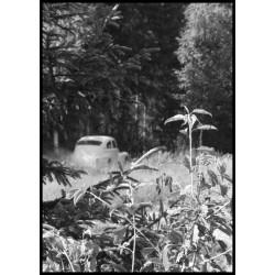 Tavla med bilrally i skogen. Fotokonst i vackra kontraster - Spoca.