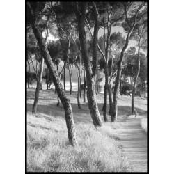 Tavlor med svartvit fotokonst av natur beställs online på Spoca i upplaga 100 stycken