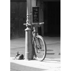 Tavla med hund och cykel. Svartvit fotokonst från Palma i Mallorca - Spoica