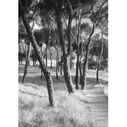 Posters och tavlor med svartvita fotografier på träd. Snygga Tavlor online