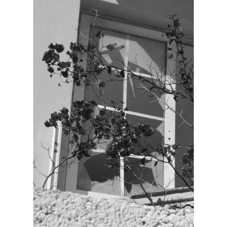 Svartvit poster med blommor vid trasigt fönster. Fototavla.