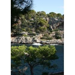 Fin tavla, poster med träd, hav och berg. Fototavla