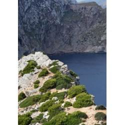 Fin tavla, poster med häftigt berg. Fototavla av vackra Mallorca