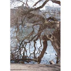Posters, tavlor Träd, naturmotiv i Hornstull