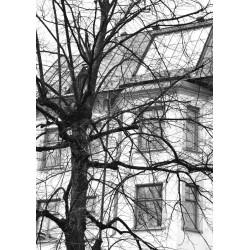 Träd i staden posters. Stockholms poster